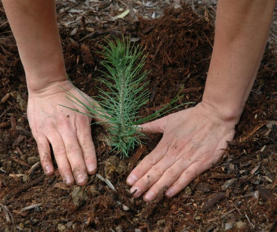 Kalesnikoff tree planting, forest stewardship, Woodlands department