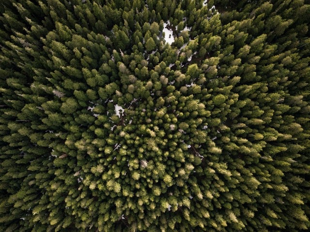 overhead view of lush evergreen forest
