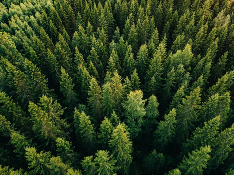 overhead view of lush forest typically used for mass timber products