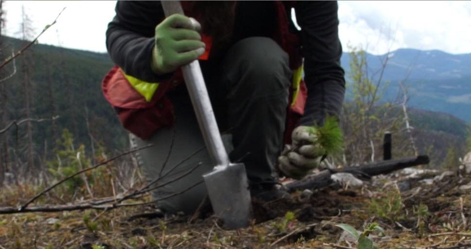 tree-planting-seedlings