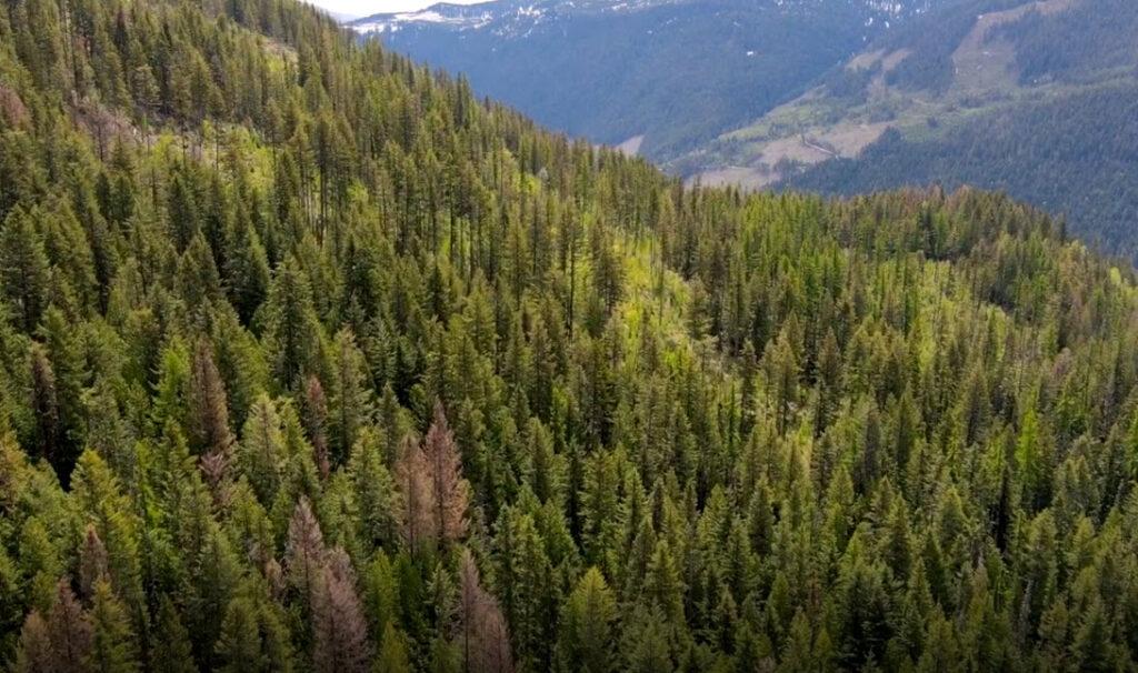 Forest near Nelson